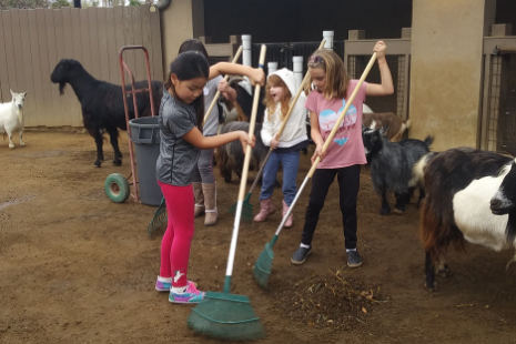 Happy Hollow Park & Zoo – Connecting people and nature through the